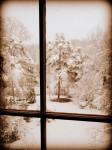 Pretty as a Picture Snow